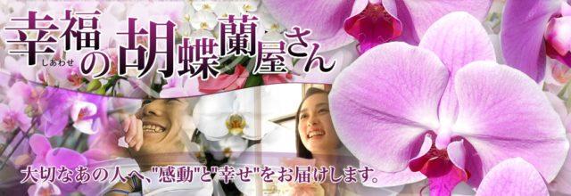 幸福の胡蝶蘭屋さん