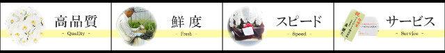 胡蝶蘭園.com