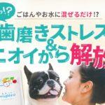 ミペロで飼い犬の歯磨きは不要に?口臭や歯周病の心配もなくなる?!