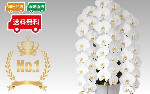 ギフトフラワー 胡蝶蘭 高品質