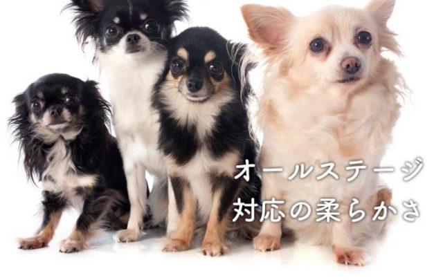 もみじhome 全犬種 オールステージ