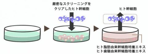 ヒト由来幹細胞エキス